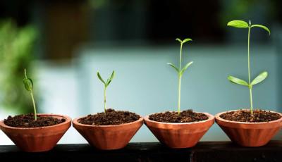 Start up che nascono: Quality Learning Consulta fa il punto e va avanti!